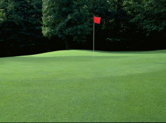 resize Golf Course 5